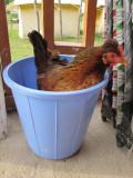 Bucket o' chicken