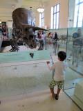 AMNH stegasaurus