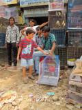 Delhi bird market
