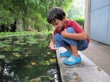 Continuing minnow-catching hopes
