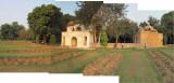 More hanging around Lodhi Garden (13 November 2011)