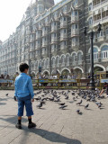 Pigeon inspection at the Gateway of India
