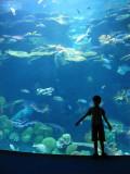 IMG_7852 Bangkok aquarium.jpg