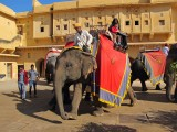 Arriving in Amber Fort in style