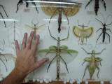 Insect display at Kuala Lumpur Butterfly Park