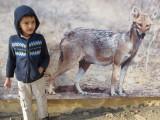 Wild Dog (Maharghar Botanical Park, Jaipur 2012)