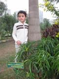 Rahil's second tree (Bombay 2012)