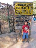 Hog Deer (Delhi 2011)