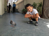 Wounded pigeon