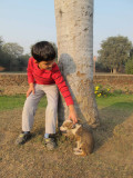 Stray, Delhi 2011