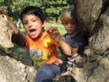 Tree climbing in Lodhi Garden with pal Magnus