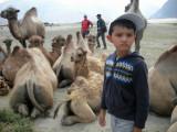 Among the Hunder camels
