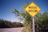 Moose Crossing Manchester VT.jpg