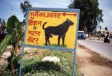 Goat Shop (near Dehra Dun)