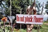 Do Not Pluck Flowers (outside of Mussourie)