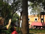 Centenario Park