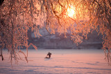 Playing with dog on the ice