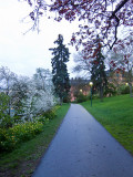 Lonly path