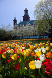 Tulips in front of Stockholm City Hall