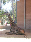 San Diego Zoo 7744.jpg