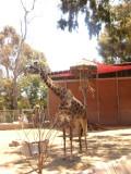 San Diego Zoo 7746.jpg