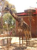 San Diego Zoo 7747.jpg