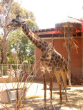 San Diego Zoo 7748.jpg
