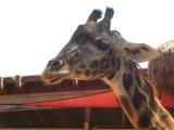 San Diego Zoo 7749.jpg