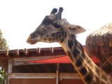 San Diego Zoo 7750.jpg