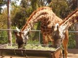 San Diego Zoo 7751.jpg