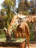 San Diego Zoo 7752.jpg