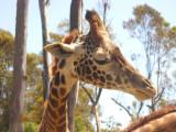 San Diego Zoo 7753.jpg