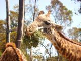 San Diego Zoo 7755.jpg