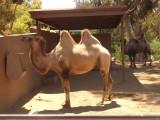 San Diego Zoo 7758.jpg