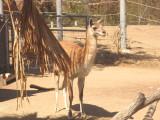 San Diego Zoo 7783.jpg