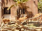 San Diego Zoo 7786.jpg