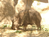 San Diego Zoo 7792.jpg