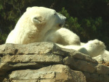 San Diego Zoo 7804.jpg