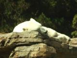 San Diego Zoo 7805.jpg