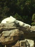 San Diego Zoo 7806.jpg