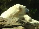 San Diego Zoo 7807.jpg