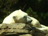 San Diego Zoo 7808.jpg