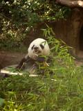 San Diego Zoo 7816.jpg