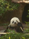 San Diego Zoo 7817.jpg