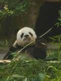 San Diego Zoo 7818.jpg