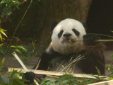San Diego Zoo 7824.jpg