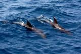 Dolphins IMG_8599.jpg