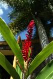 Flower IMG_8786.jpg