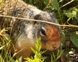 IMG_0212 squirrel