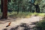 IMG_0136 I wonder where that trail goes